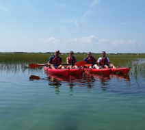 Kayak tours Ptown