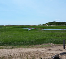Salt marsh tours Provincetown