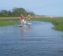Paddle board rentals Provincetown